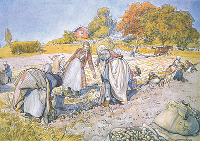The Children Filled The Buckets And Baskets With Potatoes Poster by Carl Larsson