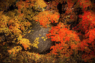 The Colors Of Autumn Poster by TL Mair