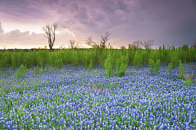 The Colors Of Bluebonnet Field On A Stormy Day - Texas Poster by Ellie Teramoto