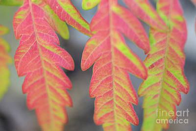 The Colors Of Shumac 8 Poster by Victor K