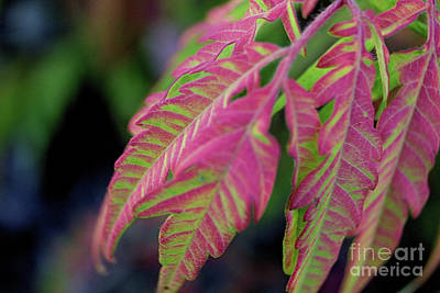 The Colors Of Shumac 9 Poster by Victor K