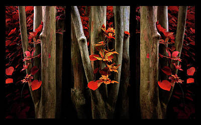 Poster featuring the photograph The Crimson Forest by Jessica Jenney
