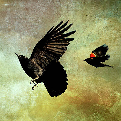 The Crow And The Blackbird Poster by Peggy Collins
