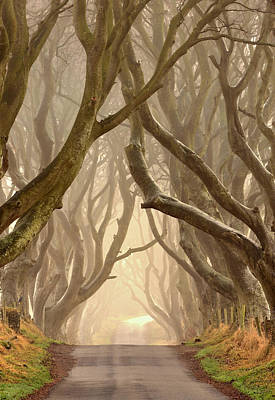 The Dark Hedges Poster by Hubert Leszczynski