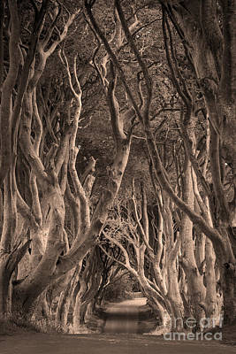 The Dark Hedges - Sepia Poster by Brian Jannsen