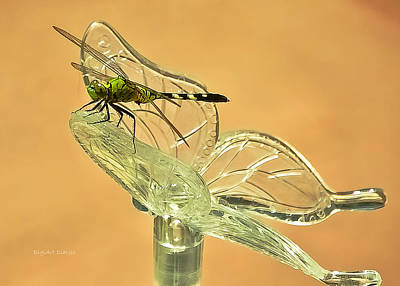 The Dragonfly And The Butterfly Poster by DigiArt Diaries by Vicky B Fuller
