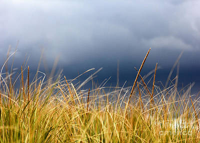 Poster featuring the photograph The Tall Grass Waves In The Wind by Dana DiPasquale