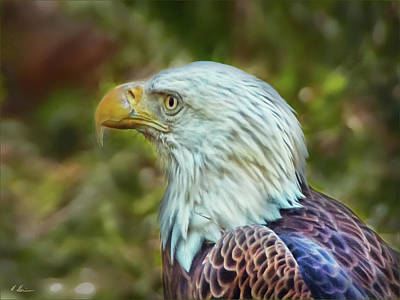 Poster featuring the photograph The Eagle Look by Hanny Heim