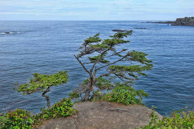 The Edge Of Cape Flattery Poster