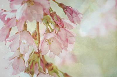 Poster featuring the photograph The Essence Of Springtime  by Connie Handscomb