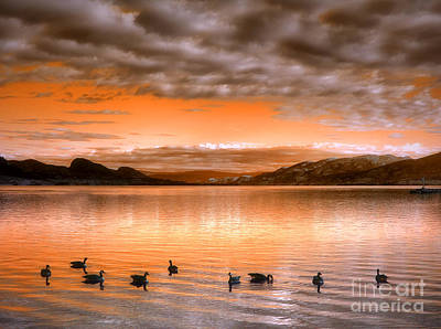 The Evening Geese Poster