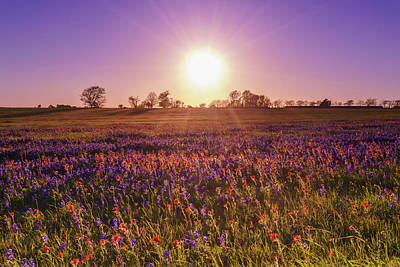 The Evening Sun Over A Wildflower Field Poster by Ellie Teramoto
