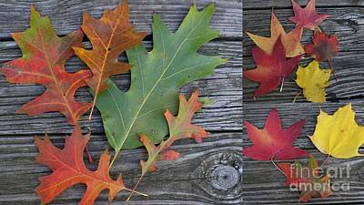 The Fallen Leaves Of Autumn - A Collage Poster by Dora Sofia Caputo Photographic Art and Design