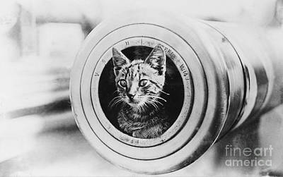 The Feline Mascot On Hmas Encounter During The First World War Poster by MotionAge Designs