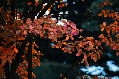 The Flair Of Autumn Poster by Nicole Frischlich