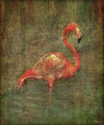 Poster featuring the photograph The Flamingo by Hanny Heim