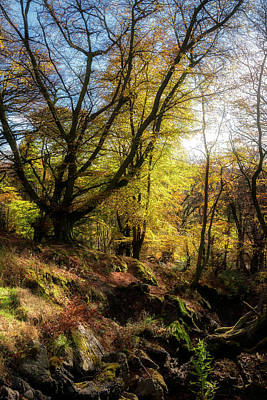 The Forest At Bracklin Falls In Callander Poster by Jeremy Lavender Photography