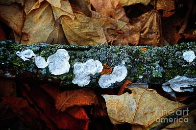 Poster featuring the photograph The Forest Floor - Cascade Wi by Mary Machare