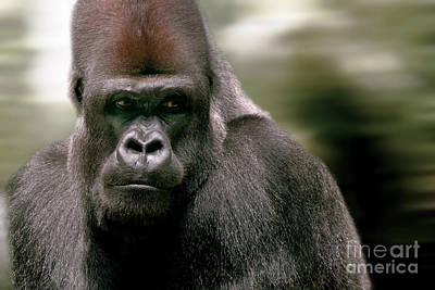 Poster featuring the photograph The Gorilla by Christine Sponchia