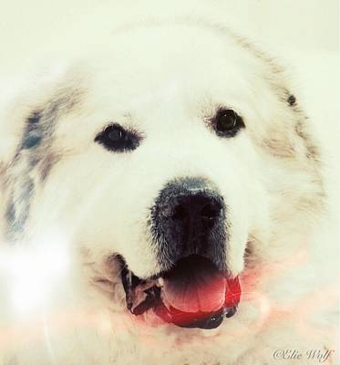 The Great Pyrenean Poster