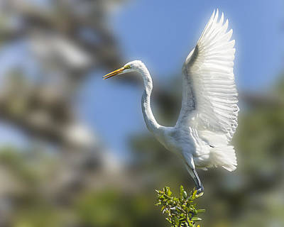 Poster featuring the photograph The Great White Egret by Paula Porterfield-Izzo