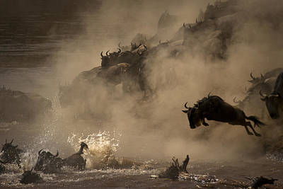 The Great Wildebeest Migration Poster by Adrian Wray