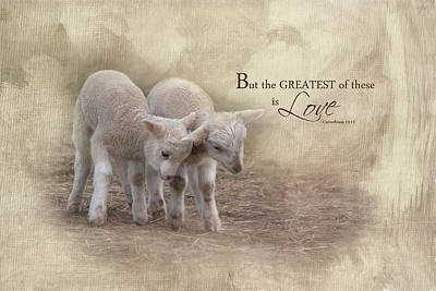 Poster featuring the photograph The Greatest Is Love by Robin-Lee Vieira