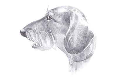 The Head Of The Dog - Haired Dachshund Poster by Anastasiia Kononenko