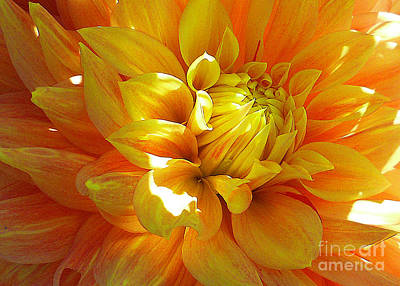 The Heart Of A Dahlia Poster