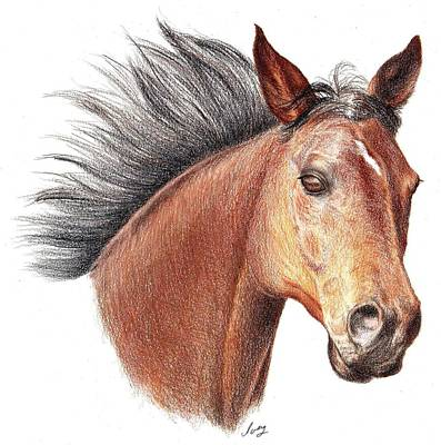 Poster featuring the drawing The Horse by Mike Ivey