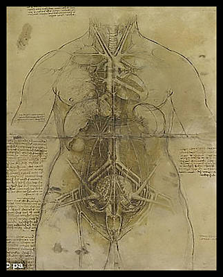 Poster featuring the painting The Human Organ System by James Christopher Hill