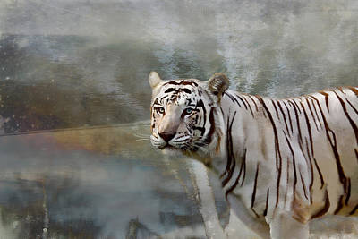 Poster featuring the photograph The Hunter by Gary Smith