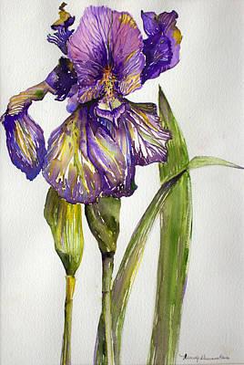 The Iris Poster