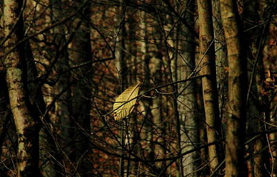The Last Leaf Poster by Bruce Patrick Smith