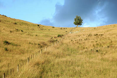 Poster featuring the photograph The Lines The Tree And The Hill by Yoel Koskas