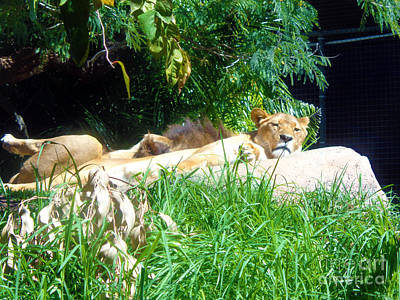 The Lion Awakes Poster