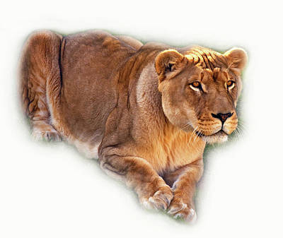 The Lioness - Vignette Poster by Steve Harrington