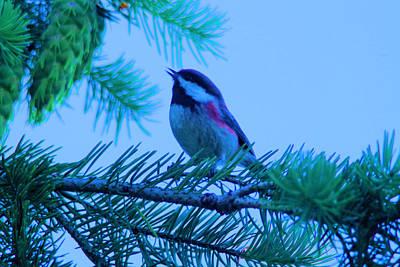 The Little Bird Sings Poster
