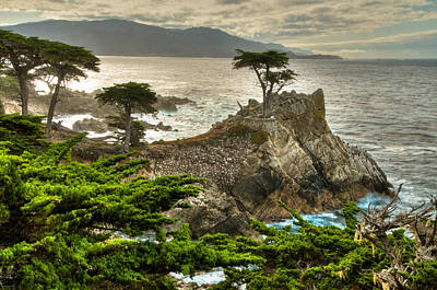 The Lone Cypress Carmel California Poster by Connie Cooper-Edwards