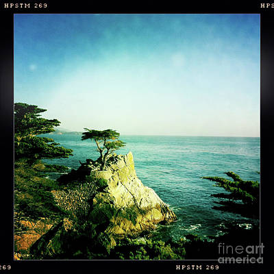 The Lone Cypress Poster by Nina Prommer