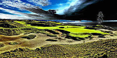 The Lone Tree On Chambers Bay - #15 Poster by David Patterson