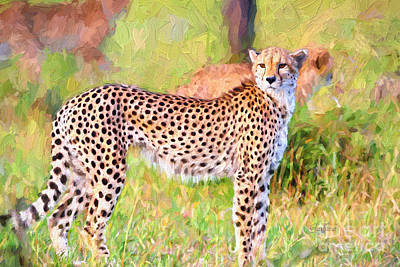The Majestic Beauty Of The Cheetah Poster