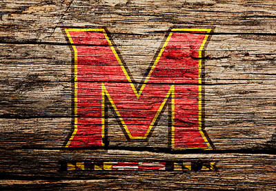The Maryland Terrapins  Poster by Brian Reaves