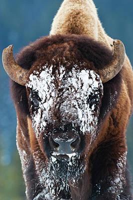 The Masked Bison Poster