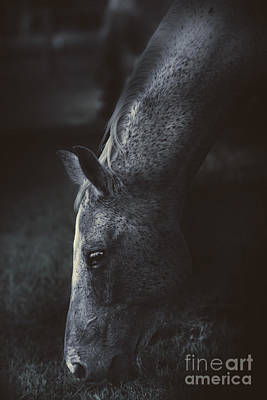 The Midnight Stallion Poster by Jorgo Photography - Wall Art Gallery