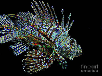 The Mighty Lion Fish Poster by Carol F Austin