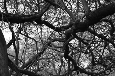 The Neural Net Poster