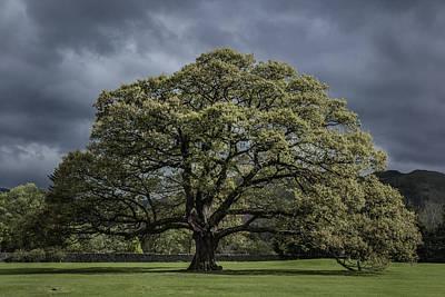 The Old Oak Of Glenridding V2.0 Poster by Chris Fletcher
