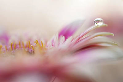 Poster featuring the photograph The One. Macro Gerbera by Jenny Rainbow
