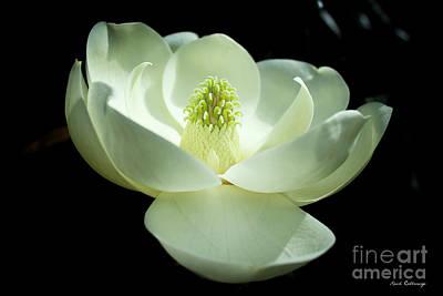 The Opening Magnolia Flower Art Poster by Reid Callaway